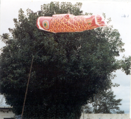 Koi (Fortaleza)